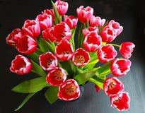 Het boeket van tulpen Stock Fotografie