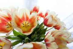 Het boeket van tulpen Stock Foto