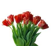 Het Boeket van tulpen dat op wit wordt geïsoleerdk Royalty-vrije Stock Afbeeldingen