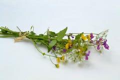 Het boeket van Wildflower Stock Foto's