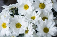 Het boeket van witte bloemen sluit omhoog stock foto's