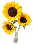 Het boeket van zonnebloemen Stock Foto's