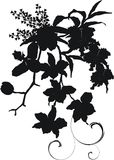 Het boeketsilhouet van de orchidee Stock Foto's