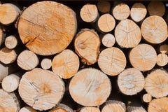Het bomen vellen van de bosbouwindustrie Stock Foto