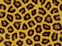 Het bont van de luipaard stock illustratie