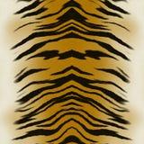 Het bont van de tijger Royalty-vrije Stock Fotografie