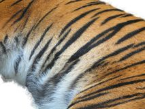 Het bont van de tijger Stock Foto's