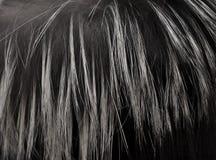 Het bont van de vos Royalty-vrije Stock Foto's