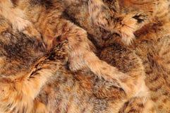 Het bont van de vos royalty-vrije stock foto