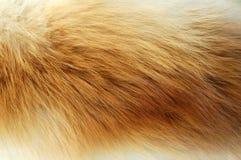 Het bont van Flox stock fotografie