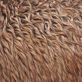 Het bont van het wild paard Stock Afbeelding