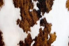 Het bonttextuur van de koe Stock Afbeelding