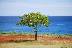 Het boomleven Stock Afbeeldingen