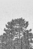 Het boomsilhouet schoot door door venster op regenachtige dag Royalty-vrije Stock Fotografie