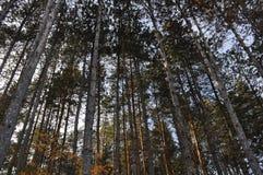 In het bos - à  rm! n stock afbeelding