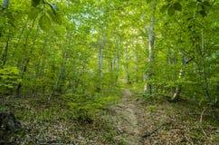 Het bos Royalty-vrije Stock Foto