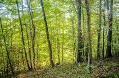 Het bos Royalty-vrije Stock Afbeelding