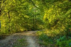 Het bos Royalty-vrije Stock Fotografie