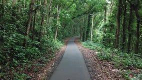 Het bos stock footage