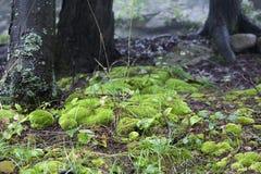 In het bos stock afbeeldingen