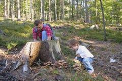 In het bos Royalty-vrije Stock Foto's