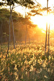 Het bos Royalty-vrije Stock Foto's
