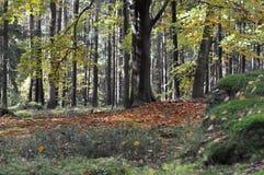Het bos Royalty-vrije Stock Afbeeldingen
