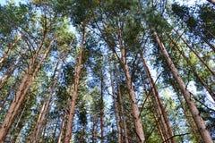 In het bos royalty-vrije stock afbeelding