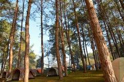 Het bos Stock Afbeeldingen