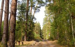 In het bos Stock Afbeelding