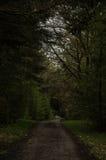 In het bos Stock Foto