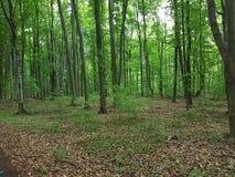 Het bos Stock Foto's