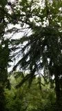 In het bos Stock Foto's