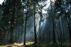 In het bos. Royalty-vrije Stock Afbeeldingen