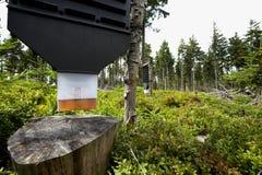 Het bos beschermt tegen boomongedierte Stock Foto's
