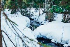 Het bos breekt een weg door de sneeuw en het ijs royalty-vrije stock afbeeldingen