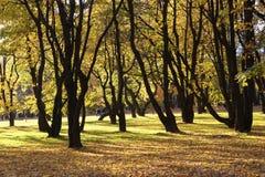 Het bos in de herfst Stock Foto's
