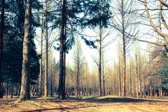 Het bos in de herfst, boomblad begint te vallen Royalty-vrije Stock Afbeeldingen