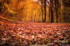 Het bos in de herfst royalty-vrije stock foto's
