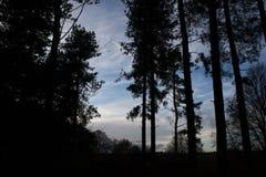 Het bos in de herfst met blauwe hemel royalty-vrije stock afbeelding