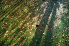 In het bos in de herfstmoeras met Eendekroos en gevallen bladeren wordt behandeld als achtergrond die royalty-vrije stock foto