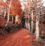 Het bos in de herfstseizoen Stock Foto