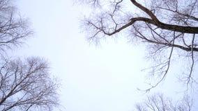 Het bos in de winter stock footage