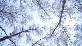 Het bos in de winter stock videobeelden