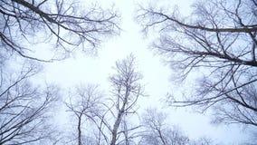 Het bos in de winter stock video