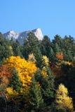 Het bos en de bergen van de herfst stock afbeeldingen