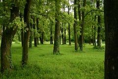 Het bos en de bomen van de lente Royalty-vrije Stock Foto's