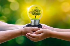 Het bos en de bomen zijn in het licht Concepten die milieubehoud en globale verwarmende installatie binnenlamp kweken royalty-vrije stock afbeelding