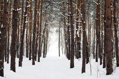Het bos en de boom van de winter in sneeuw Royalty-vrije Stock Afbeeldingen