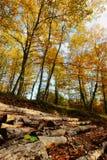Het bos en de boomstammen van de herfst Stock Afbeeldingen